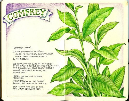 A comfrey salve recipe from http://valwebb.wordpress.com/2007/09/09/garden-journal-comfrey/
