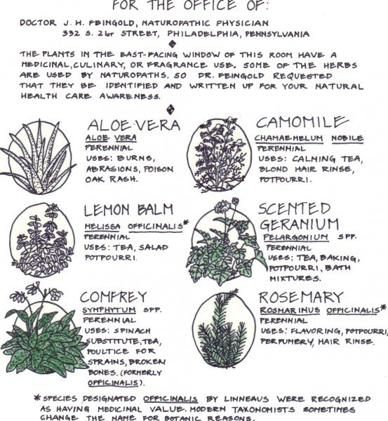 oval herb drawing