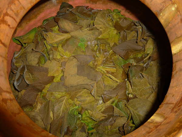 The spent Cornutia leaves after the distillation is over. Looking down into the retort pot. We were surprised at the green leaves that survived the heat.