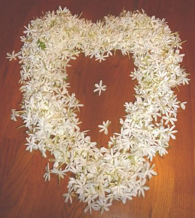jasmine auriculatum flowers arranged into a heart shape